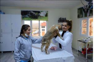 Yaralı halde bulunan yavru köpek yaşama tutundu