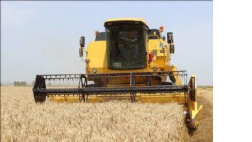 Mardin buğday üretiminde 6´ıncı sırada