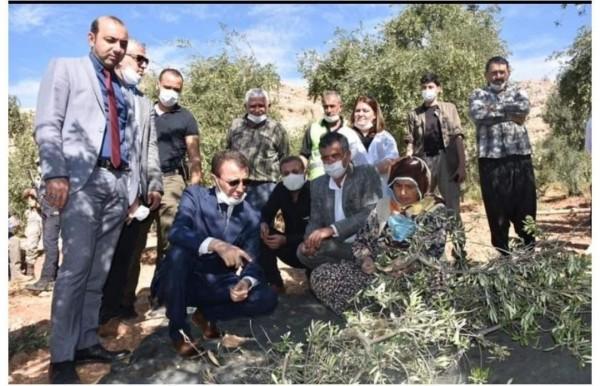 """Derik kaymakamı  """"Hedef 1 Milyon Zeytin Ağacı"""""""