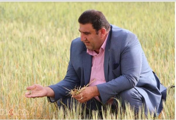 Mardin'de Kuraklık Çiftçiyi vurdu